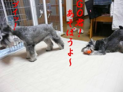 GO君遊ぼ!3-s