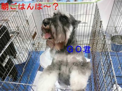 九州インターGO君-s