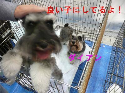 九州インターダイアン-s