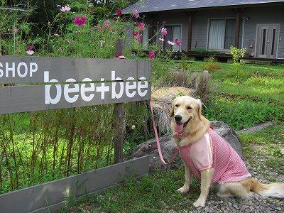 bee+bee