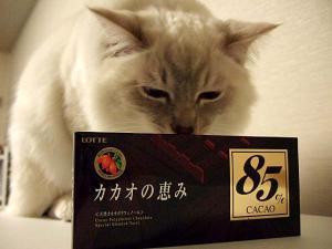 2006_0404inugao1054.jpg
