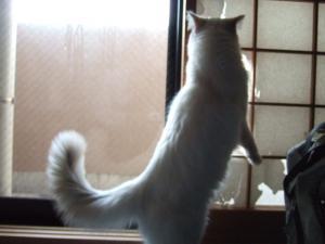 2006_0406inugao0797.jpg