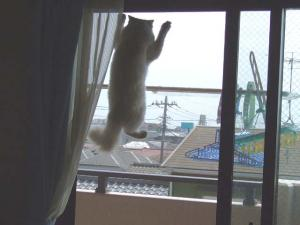 2006_0410inugao1125.jpg