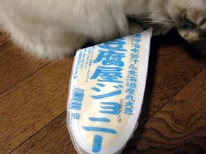2006_0412inugao1127.jpg