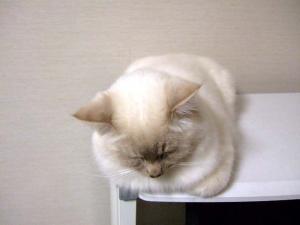 2006_0414inugao0714.jpg