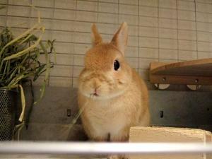2006_0415inugao1070.jpg