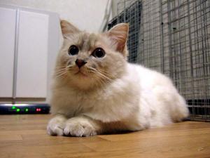 2006_0415inugao1159.jpg