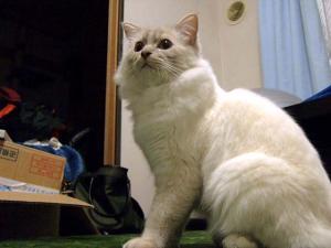 2006_0417inugao1200.jpg
