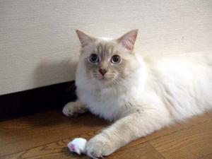 2006_0418inugao1210.jpg