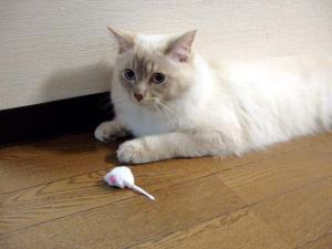 2006_0418inugao1211.jpg