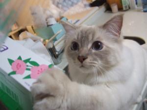 2006_0420inugao1268.jpg
