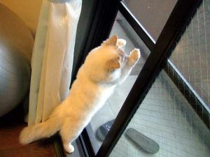 2006_0424inugao1311.jpg