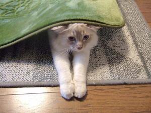 2006_0425inugao1317.jpg