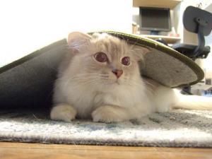 2006_0425inugao1319.jpg