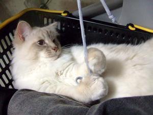 2006_0427inugao1345.jpg