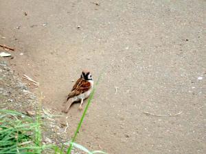2006_0616inugao1662.jpg