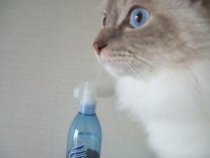 2006_0619inugao1685.jpg