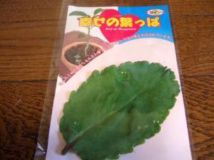 2006_0716inugao1901.jpg