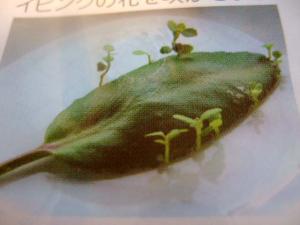 2006_0716inugao1902.jpg
