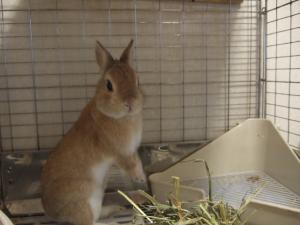 2006_0805inugao1886.jpg