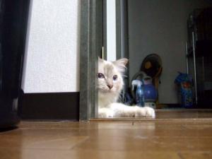 2006_0805inugao2045.jpg