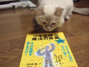 2006_0805inugao2050.jpg