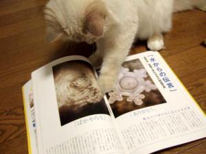 2006_0805inugao2052.jpg