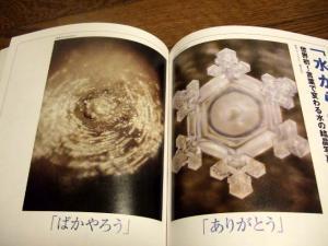 2006_0805inugao2053.jpg