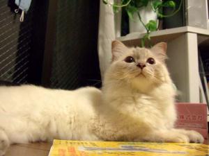 2006_0805inugao2057.jpg