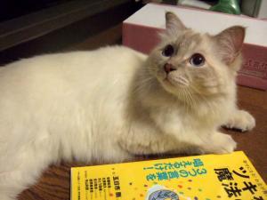 2006_0805inugao2058.jpg