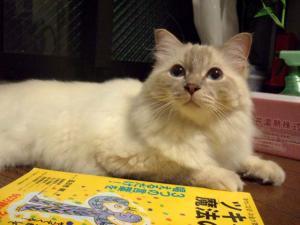 2006_0805inugao2060.jpg