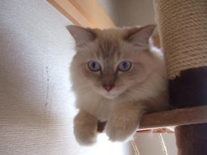 2006_0821inugao2151.jpg