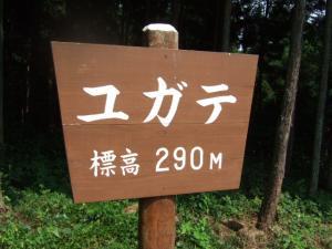 2006_0821inugao2158.jpg