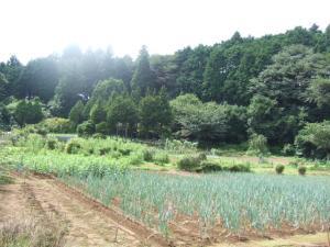 2006_0821inugao2159.jpg
