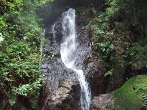 2006_0821inugao2163.jpg