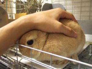 2006_1002inugao2184.jpg