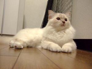 2006_1011inugao2065.jpg