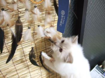 2006_1106inugao2142.jpg