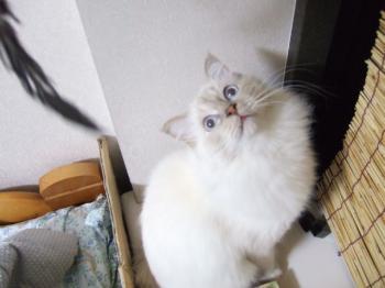 2006_1106inugao2143.jpg
