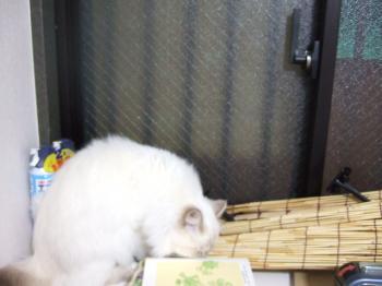 2006_1106inugao2146.jpg