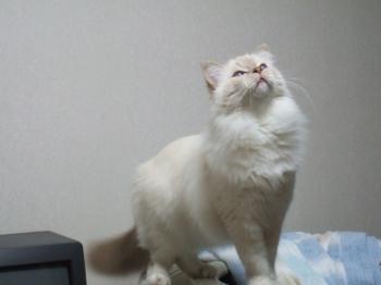2006_1106inugao2150.jpg