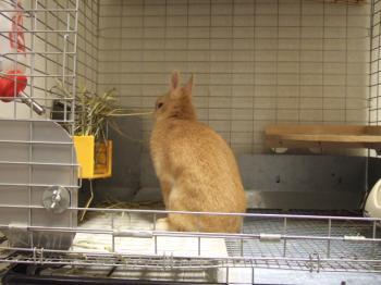 2006_1113inugao2102.jpg
