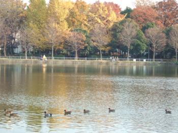 2006_1202inugao1937.jpg