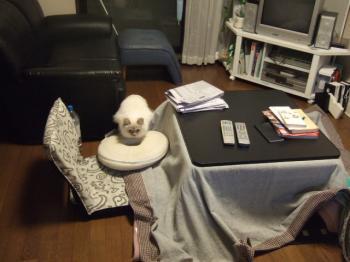 2007_0109inugao2061.jpg