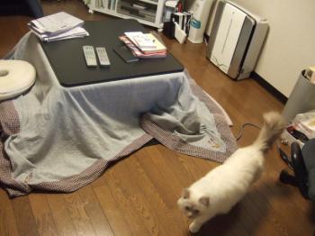 2007_0109inugao2066.jpg