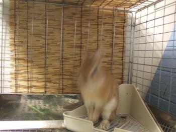 2007_0131inugao2201.jpg