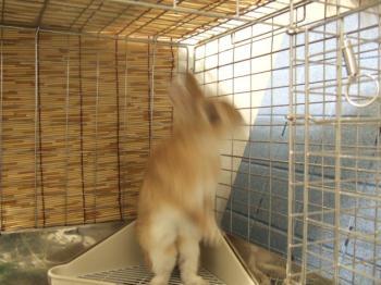 2007_0131inugao2202.jpg