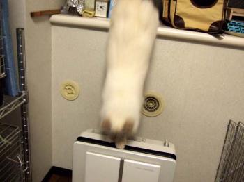 2007_0417inugao1703.jpg