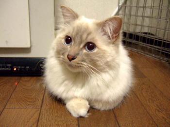 2007_0417inugao1710.jpg