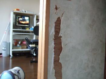 2007_0504inugao1646.jpg